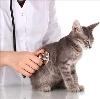 Ветеринарные клиники в Кири